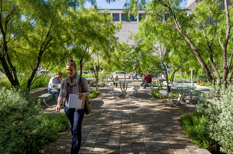 Implementing a more sustainable future with urban permeable plazas and gardens of native drought-tolerant plants at the Arizona State University Polytechnic Campus. Ten Eyck Landscape Architecture / Bill Timmerman